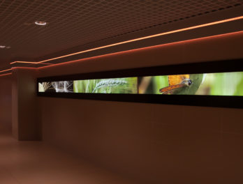 lumisheet led podświetlenie architektura